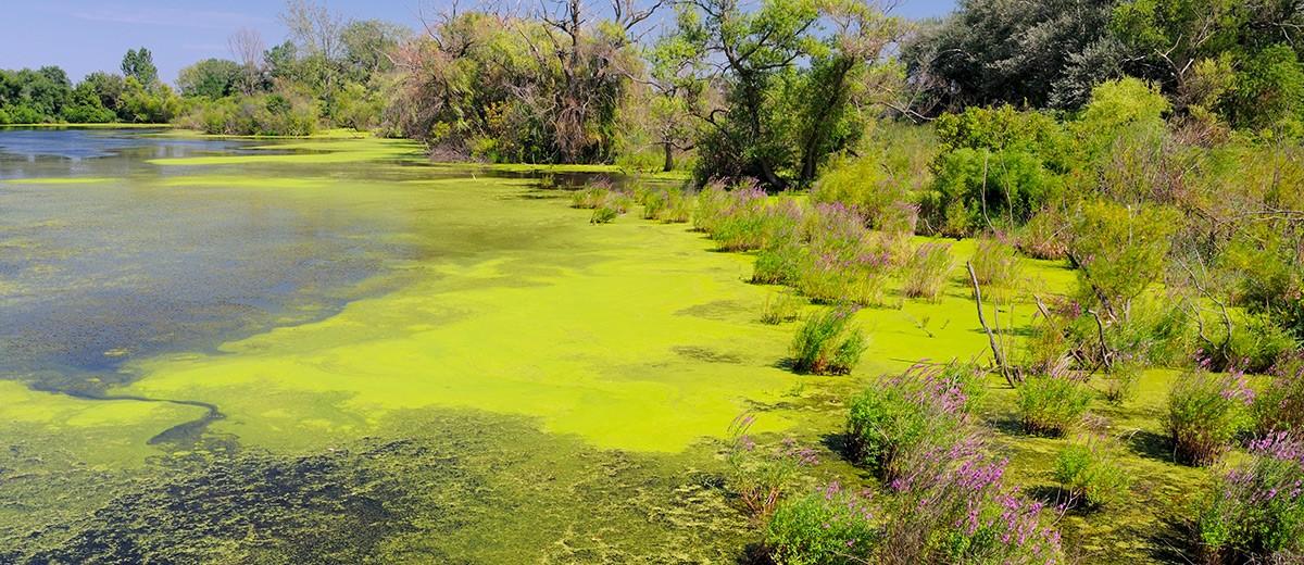 http://www.taso.fr/content/8-lutter-contre-la-proliferation-des-algues